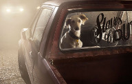 The Silence of Dogs in Cars... Фотограф Martin Usborne